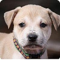 Adopt A Pet :: Shaun White - Austin, TX
