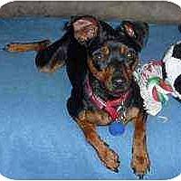 Adopt A Pet :: Tipper - Florissant, MO
