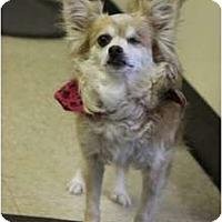 Adopt A Pet :: Priscilla - conyers, GA