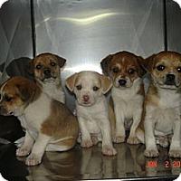 Adopt A Pet :: Gail - Stilwell, OK