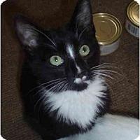 Adopt A Pet :: Harper - Davis, CA