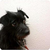 Adopt A Pet :: Chino - Lake Forest, CA