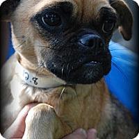 Adopt A Pet :: Marta - Vancleave, MS