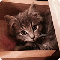 Adopt A Pet :: Khloe - Douglas, ON