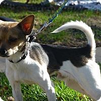 Adopt A Pet :: Jerry - Wyanet, IL