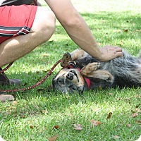 Adopt A Pet :: Little Girl - Daleville, AL