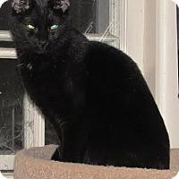 Adopt A Pet :: Jinx - Williamston, MI