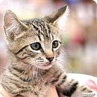 Adopt A Pet :: Miller - Westchester, CA