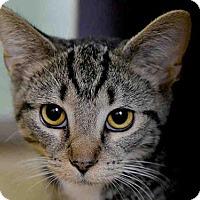 Adopt A Pet :: PAL - Pittsburgh, PA