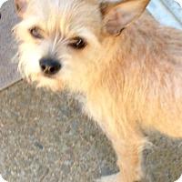 Adopt A Pet :: Nellie - Alpharetta, GA