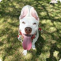 Adopt A Pet :: Ghost - El Cajon, CA