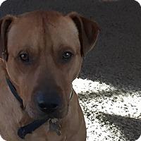 Adopt A Pet :: Slim Jim-Adopted! - Detroit, MI