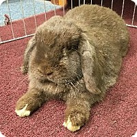 Adopt A Pet :: Scotty - Woburn, MA