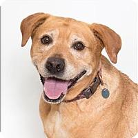 Adopt A Pet :: Kirra - San Luis Obispo, CA