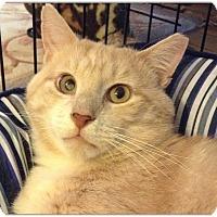 Adopt A Pet :: Denton - Flushing, NY