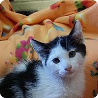 Adopt A Pet :: Flurry - Berlin, CT