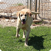 Adopt A Pet :: Deek - Harmony, Glocester, RI