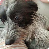 Adopt A Pet :: Oliver - Pasadena, CA