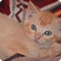 Adopt A Pet :: Aj Litter - Hayden - Williamston, MI