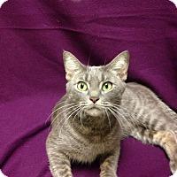Adopt A Pet :: JESSIE - Watauga, TX