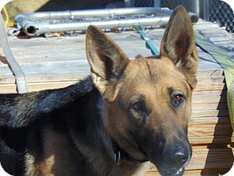 German Shepherd Dog Mix Dog for adoption in Greeneville, Tennessee - Farrah
