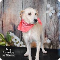 Adopt A Pet :: IZZY - Conroe, TX
