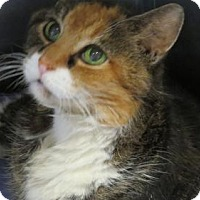 Adopt A Pet :: Cher - Covington, VA