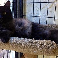 Adopt A Pet :: Cole - Tampa, FL