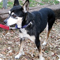 Fox Terrier (Smooth) Mix Dog for adoption in Georgetown, Texas - Genie
