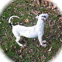 Adopt A Pet :: Foggy - Ijamsville, MD