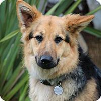 Adopt A Pet :: Cassie - San Diego, CA