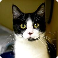 Adopt A Pet :: Sylvie - Kettering, OH