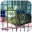 Photo 2 - Domestic Shorthair Cat for adoption in Fort Lauderdale, Florida - Gianna