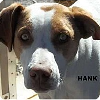 Adopt A Pet :: Hank - Arenas Valley, NM