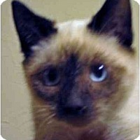 Adopt A Pet :: Maxwell - Davis, CA