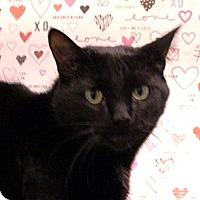 Adopt A Pet :: Tidbit - Albany, NY