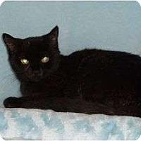 Adopt A Pet :: Libby Lou - McDonough, GA