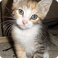 Adopt A Pet :: Minnie - Chandler, AZ