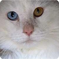 Adopt A Pet :: Harley - Arlington, VA
