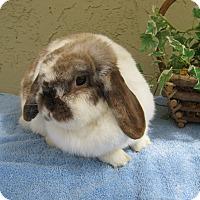 Adopt A Pet :: Willowmina - Bonita, CA