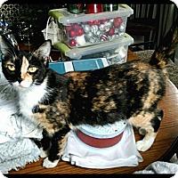 Adopt A Pet :: Olivia - Southington, CT