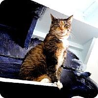 Adopt A Pet :: Sophie - Belleville, MI