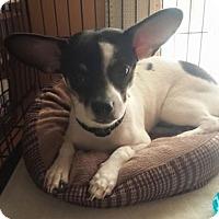 Adopt A Pet :: Yoda - Fayette City, PA