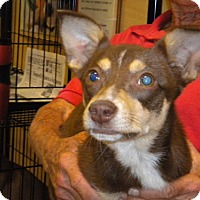 Adopt A Pet :: Robyn - Fresno, CA