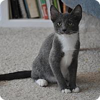 Adopt A Pet :: Eloise - Encinitas, CA