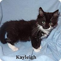 Adopt A Pet :: Kayleigh - Bentonville, AR