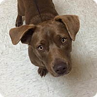 Adopt A Pet :: Crockett - Woodward, OK