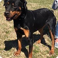 Adopt A Pet :: Jasmine - Kaufman, TX