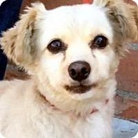 Adopt A Pet :: MOZART (video) - Los Angeles, CA