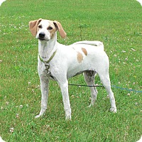 Adopt A Pet :: Petra - New Oxford, PA